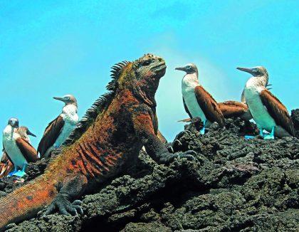 Südamerika & Galápagos-Inseln